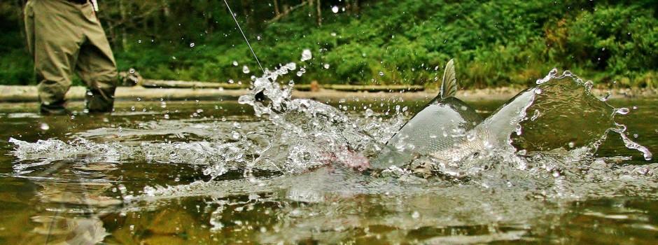 Freshwater 3 Slider