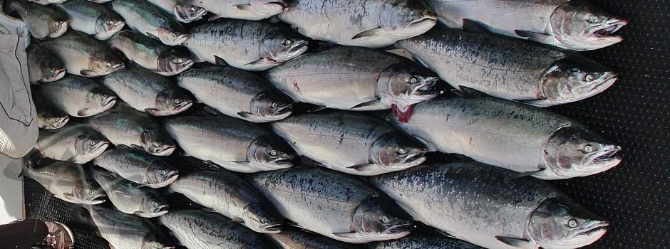 Saltwater fishing classic alaska charters for Alaska freshwater fish